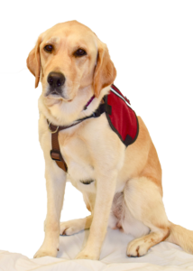 victim-support-dog-coco